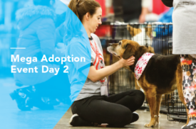 Mega Adoption Event Day 2