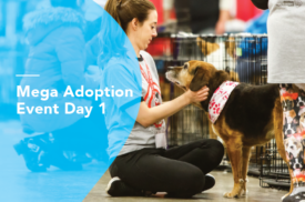 Mega Adoption Event Day 1
